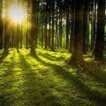 Pohon Bisa Berbicara dan Berkomunikasi Benarkah